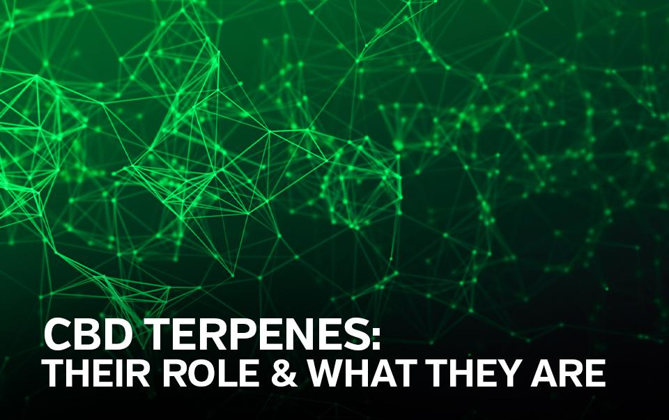 What Are CBD Terpenes and What Do They Do?