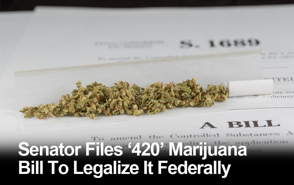 Senator Files '420' Marijuana Bill To Legalize It Federally