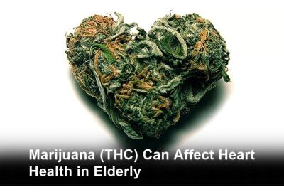 Marijuana (THC) Can Affect Heart Health in Elderly