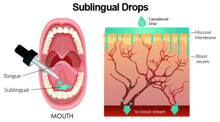 Sublingual Diagram